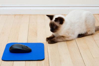 Mousepads mit praktischen Klebepunkten